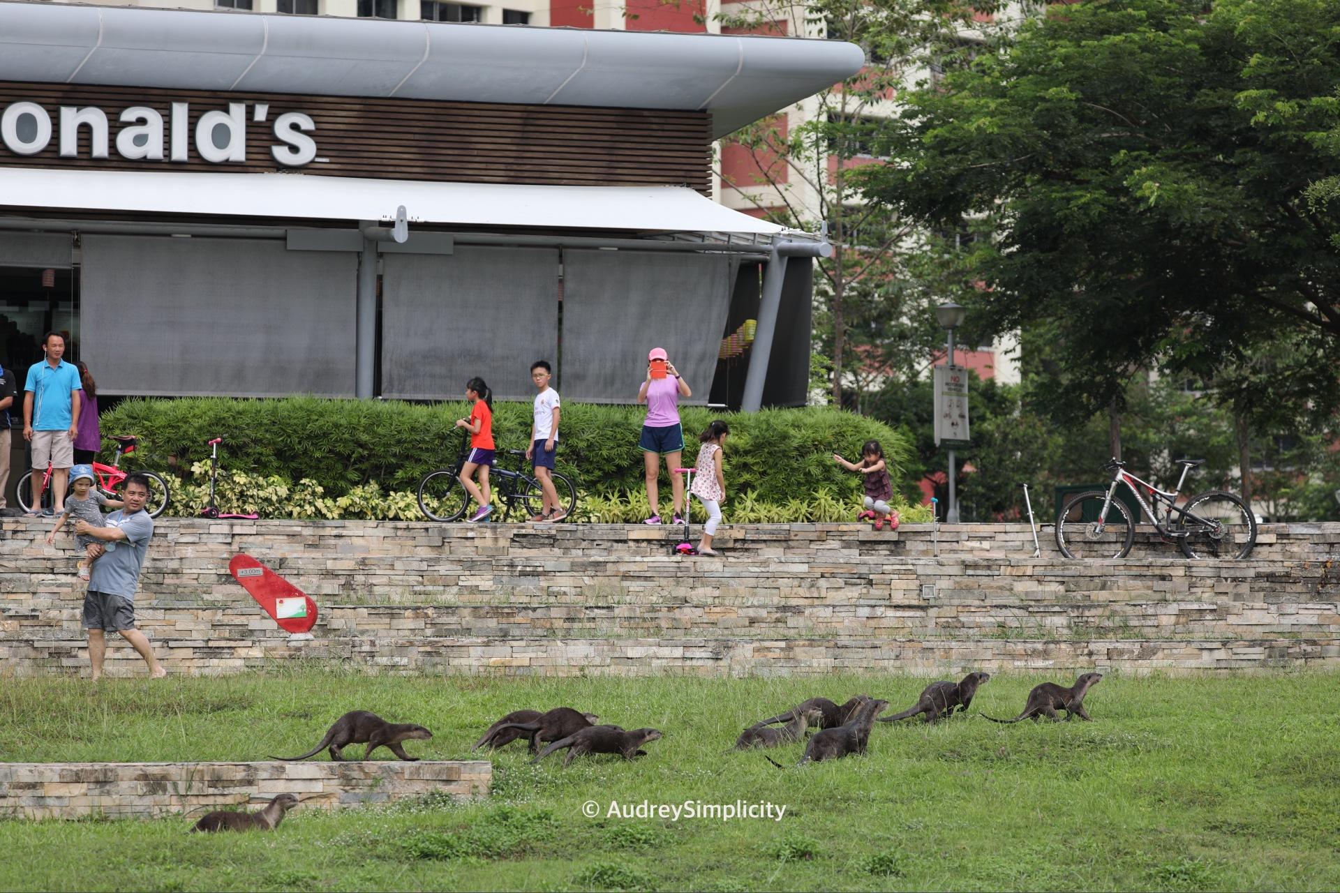 Singapore Bishan 10 Otters