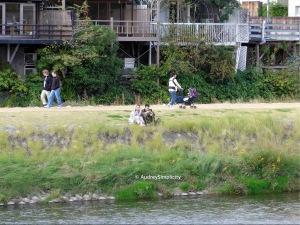 Kamogawa - Duck River taken by AudreySimplicity