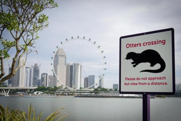 Otters Crossing.jpg