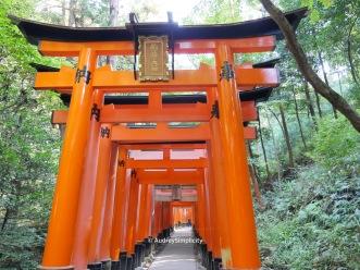 Inari Torri Gates