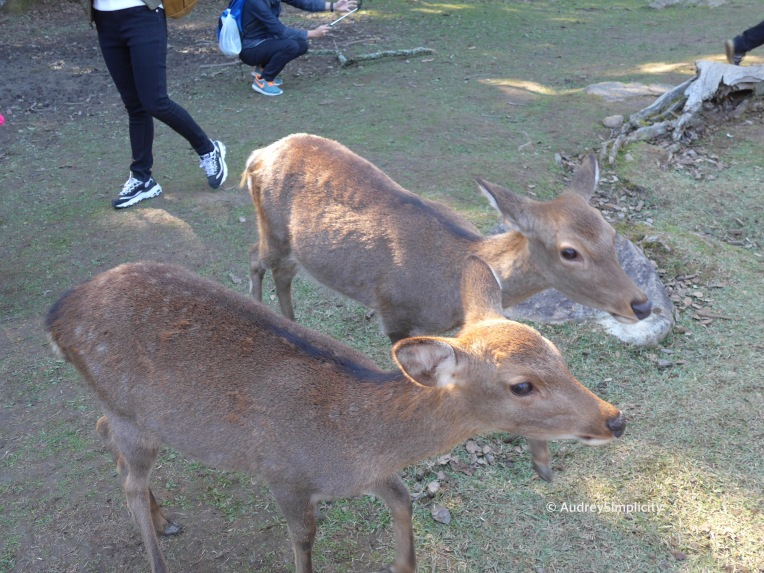 Deers at Nara Park by AudreySimplicity