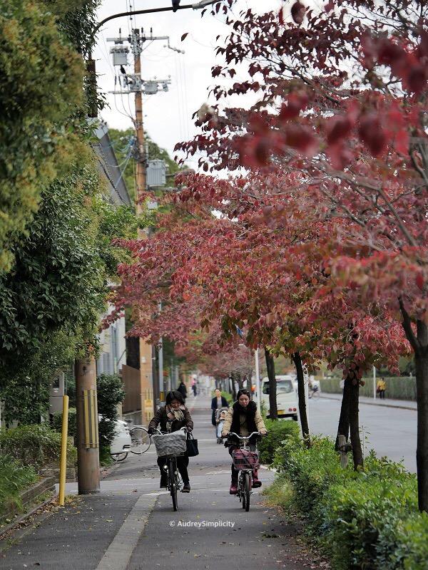 Cyclist along Kyoto Nijo