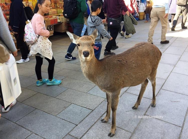 Nara Bambi Land