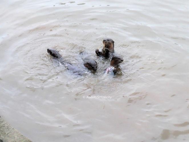 otters-boat-quay-
