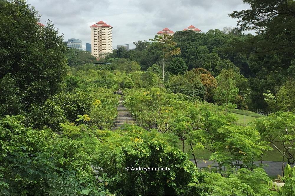 view-from-kent-ridge-canopy-walk-img_2767