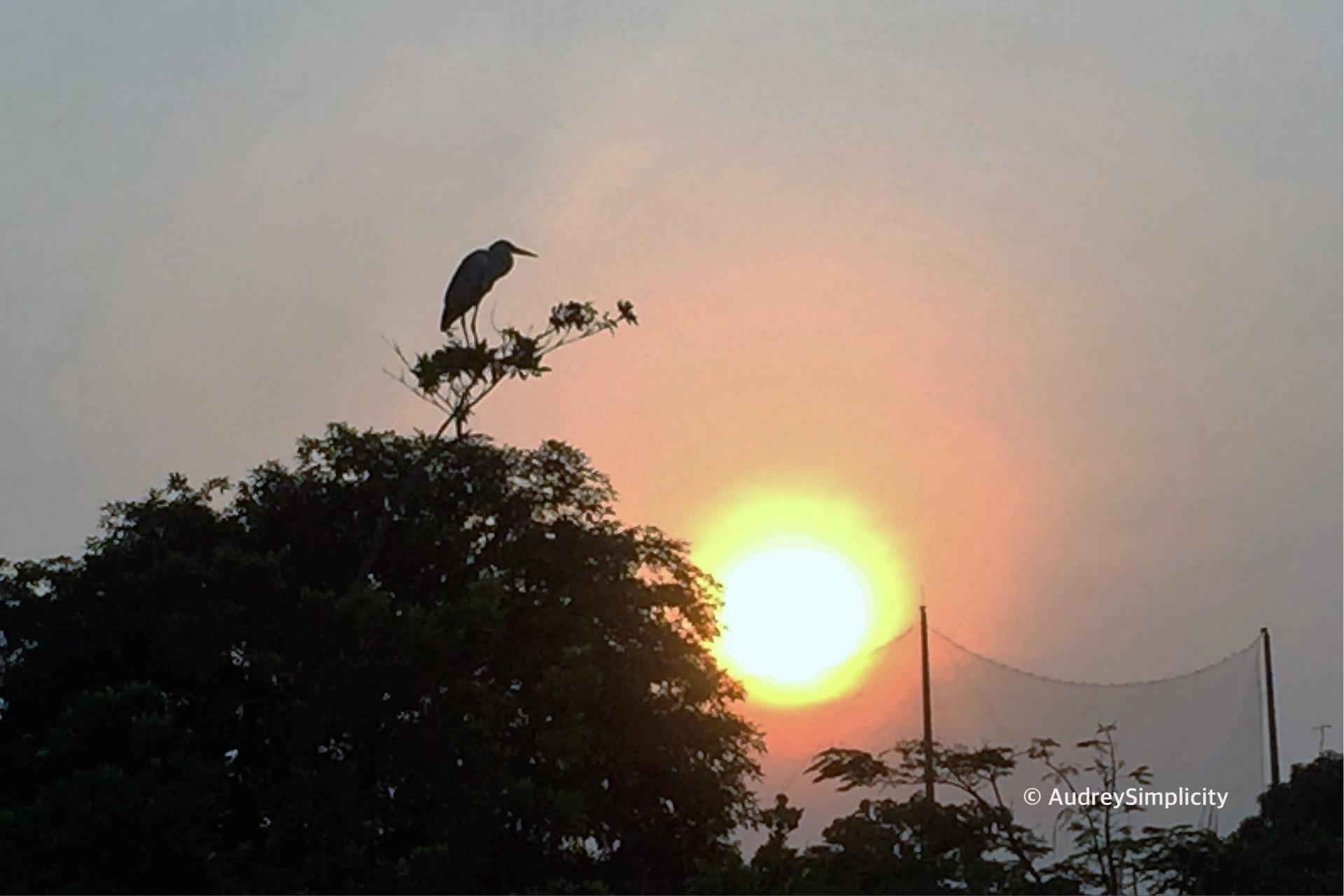 Sunrise - Singapore Bay East Garden