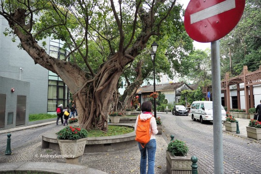 Taipa, Rua do Cunha