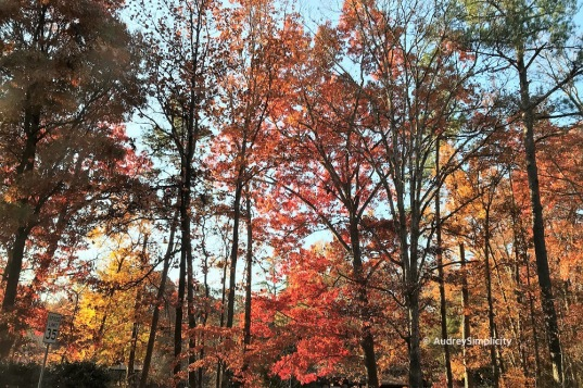 Autumn in Raleigh