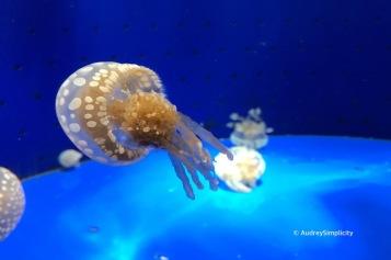 Kagoshima Aquarium