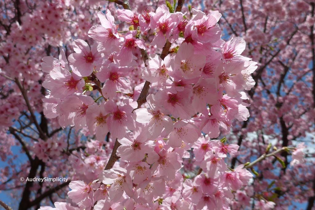 Spring at Shinjuku Gyoen, Toyko