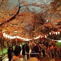 Sakura 🌸 Experience at Ueno Park