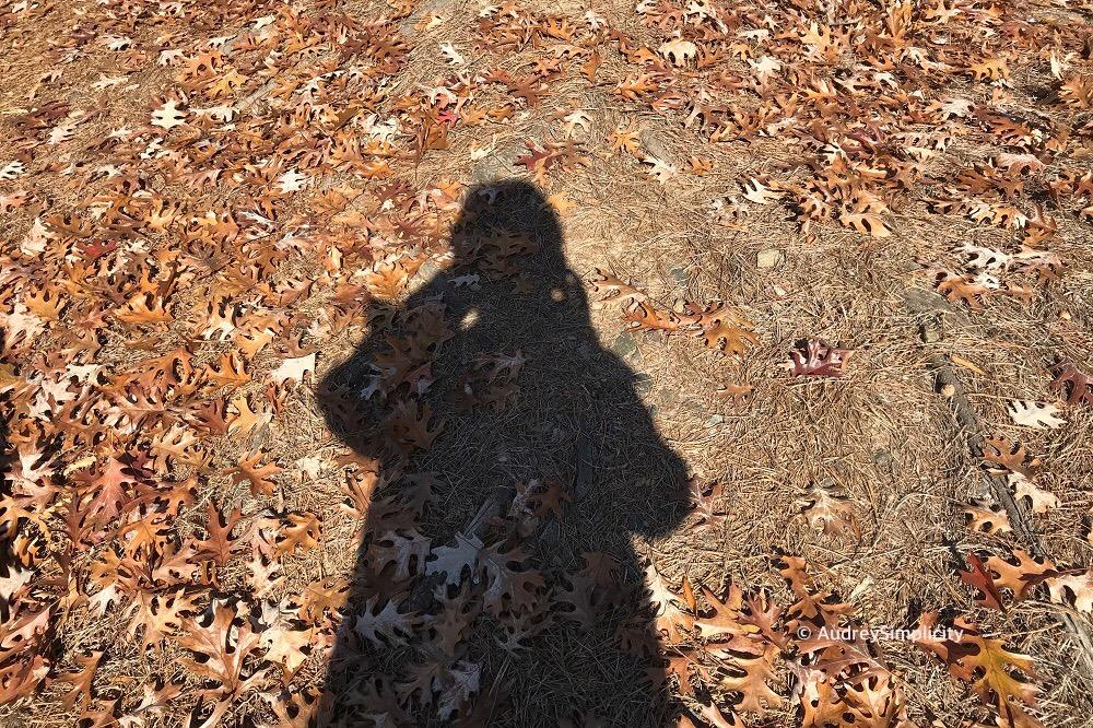 Autumn in Raleigh.JPG